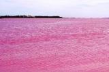 danau pink pic3