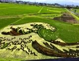 Inilah Berbagai Seni Sawah Jepang Yang Menakjubkan 7