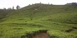 Puncak Run 10K Agrowisata Gunung Mas