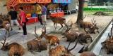 Nara – Kota yang 'Dikuasai' Rusa