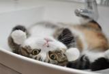 Hari Kucing pic