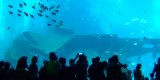 S.E.A Aquarium Singapore