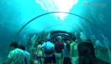 sea aquarium singapore pic