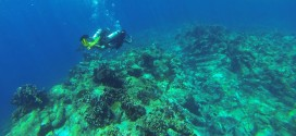 Indahnya Gunung Api Bawah Laut Mahangetang, Sulawesi Utara