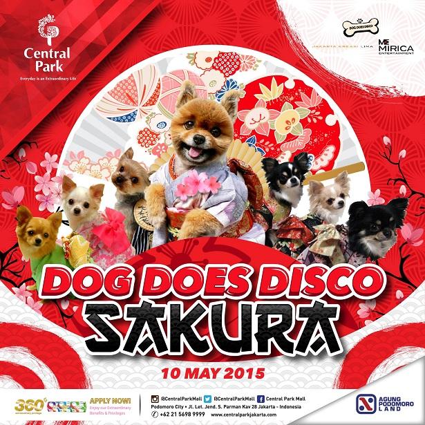 Dog Does Disco
