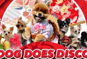 Dog Does Disco Pop Up Market & Celebrity Market